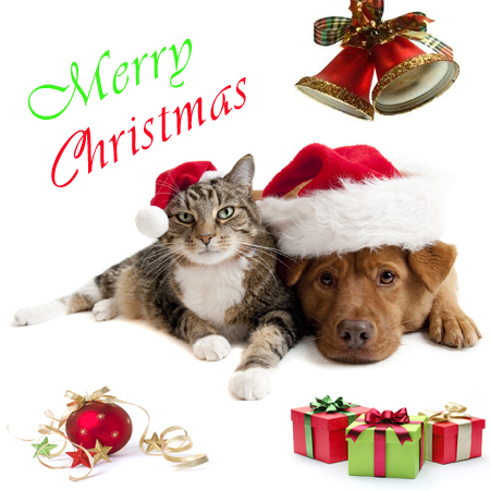 merry christmas pics aruba animal shelter
